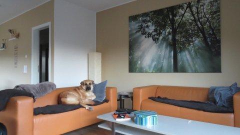 Ferienhaus mit Hund Eifel
